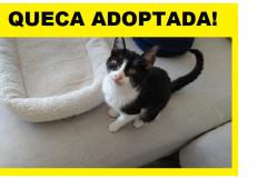 QUECA-ADOPTADA